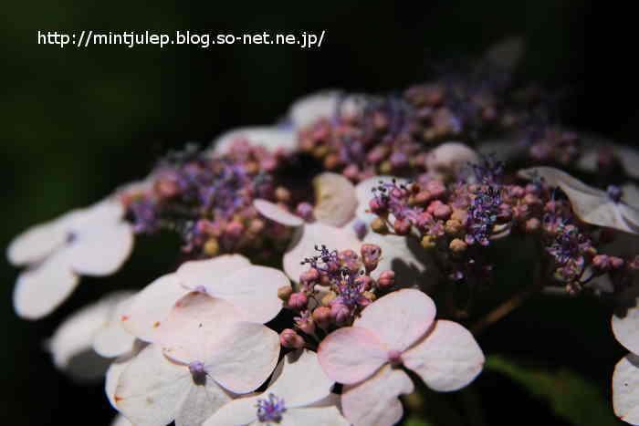 IMG_1741.JPG